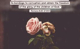 Romans 8:20-21